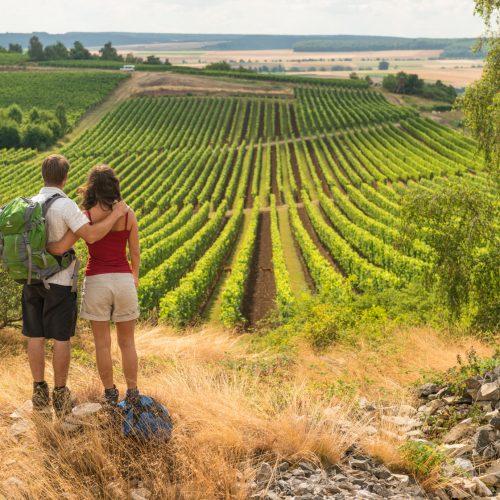 Rückansicht eines Paares, das sich umarmt hält und auf einen Weinberg blickt